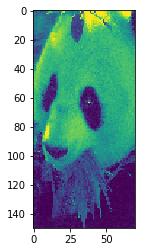 panda cropped